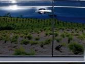 Le vigne del Carignano del Sulcis riflesse in un'auto blu